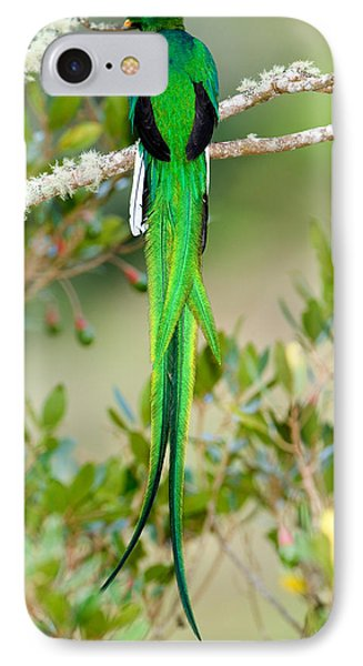 Close-up Of A Resplendent Quetzal IPhone Case by Panoramic Images