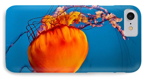 Close Up Of A Sea Nettle Jellyfis Phone Case by Eti Reid