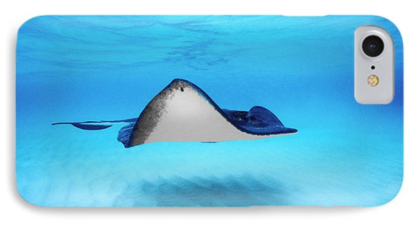 Close-up Of A Southern Stingray IPhone Case