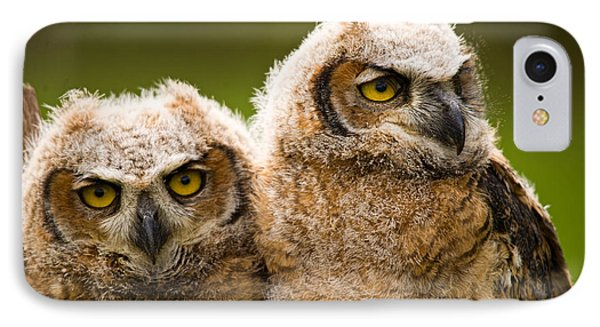 Close-up Of A Two Great Horned Owlets IPhone Case