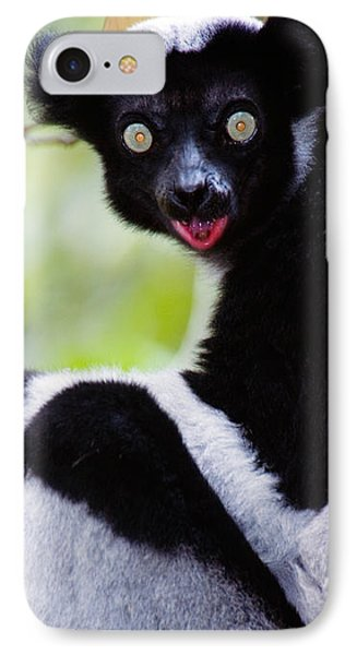 Close-up Of An Indri Lemur Indri Indri IPhone Case by Panoramic Images