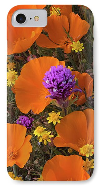 Close-up Of California Poppy IPhone Case by Panoramic Images