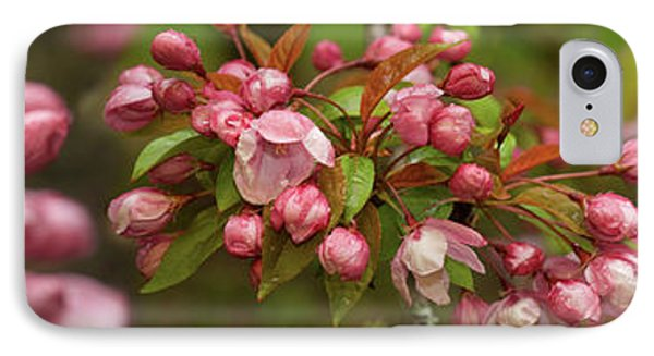Close-up Of Cherry Blossom Buds IPhone Case by Panoramic Images