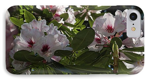 Close-up Of Cherry Blossom Flowers IPhone Case by Panoramic Images