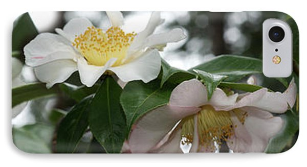 Close-up Of Details Of Camellia Flowers IPhone Case