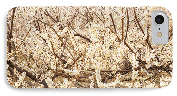 Close Up Of Flowering Cherry Tree IPhone Case by Panoramic Images