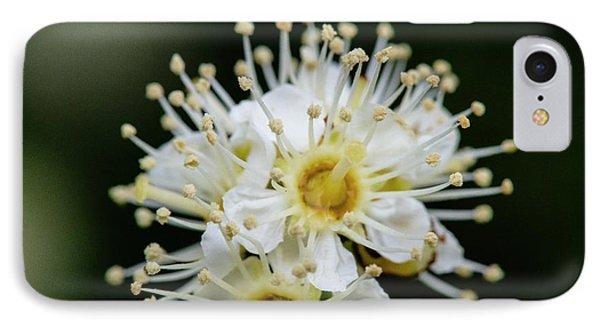 Close Up Of Maple Leaf Viburnum (also IPhone Case by Matt Freedman