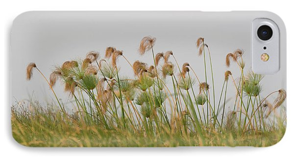 Close-up Of Papyrus Plants, Okavango IPhone Case by Panoramic Images