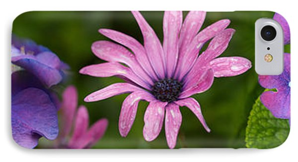 Close-up Of Purple Passion Flowers IPhone Case by Panoramic Images