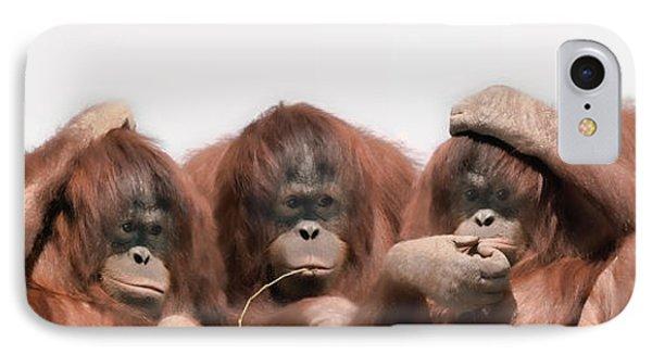 Close-up Of Three Orangutans IPhone Case
