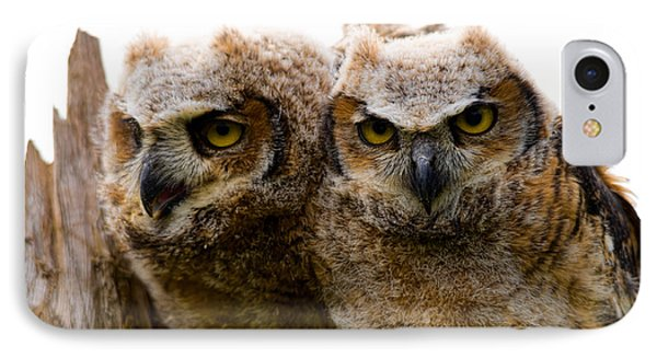 Close-up Of Two Great Horned Owlets IPhone Case by Panoramic Images
