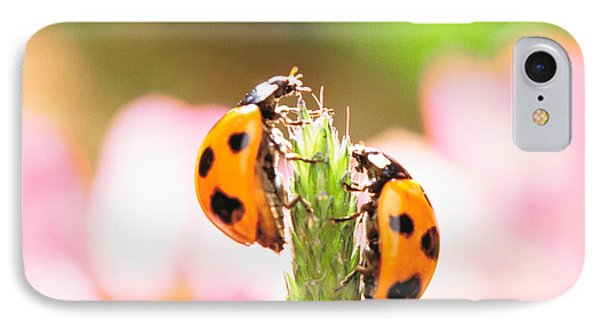 Close Up Of Two Ladybugs IPhone Case by Panoramic Images
