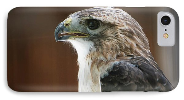 Close-up Portrait Of Hawk With Beak IPhone Case