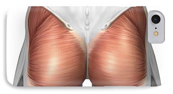 Close-up View Of Human Gluteal Muscles Phone Case by Stocktrek Images