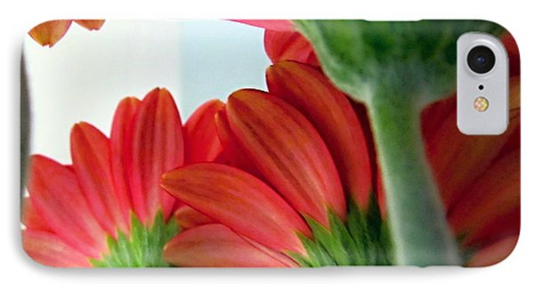 Close View From Under The Red Daisies Phone Case by Danielle  Parent