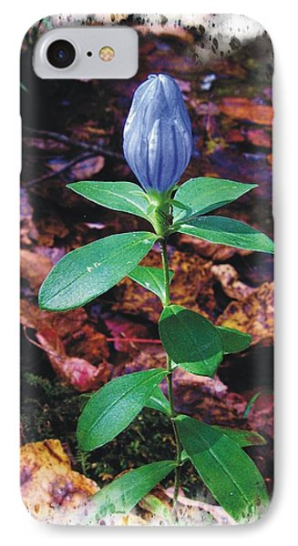 Closed Gentian IPhone Case