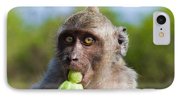 Closeup Monkey Eating Cucumber IPhone Case