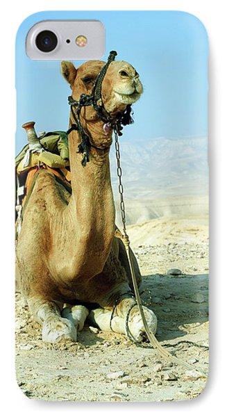 Closeup Of A Camel IPhone Case