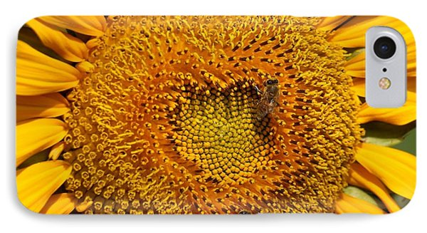 Closeup Of A Radiant Sunflower IPhone Case