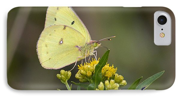 Clouded Sulphur IPhone Case by Randy Bodkins