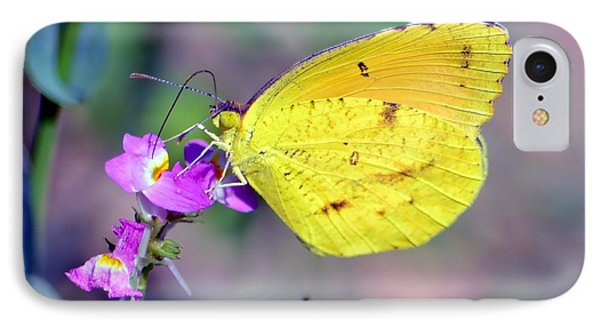 Cloudless Sulphur IPhone Case by Deena Stoddard