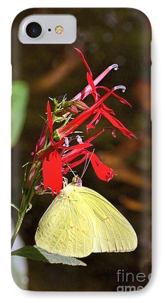 IPhone Case featuring the photograph Cloudless Sulphur On Cardinal Flower by Susi Stroud