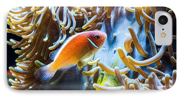 Clown Fish - Anemonefish Swimming Along A Large Anemone Amphiprion Phone Case by Jamie Pham