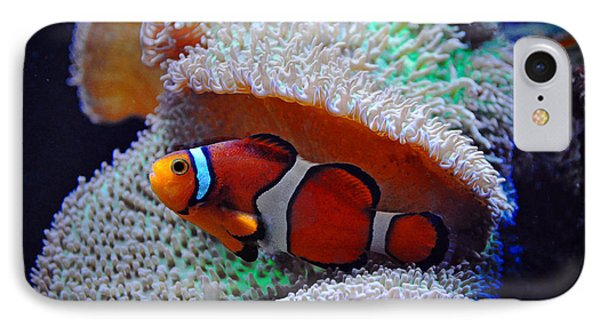 IPhone Case featuring the photograph Clown Fish by Savannah Gibbs