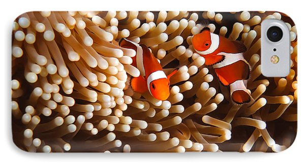 Clownfish In Coral  Phone Case by Fototrav Print