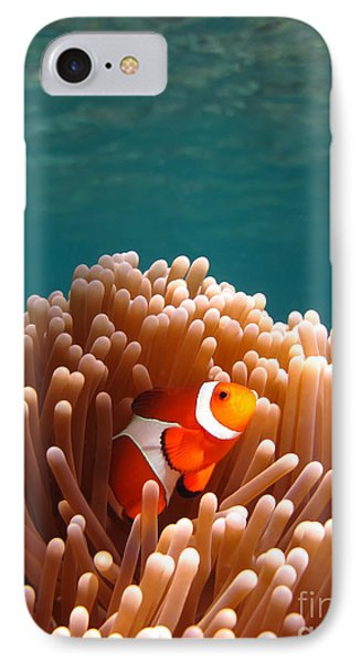 Clownfish In Coral Garden Phone Case by Fototrav Print