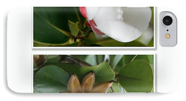 Clusia Rosea - Clusia Major - Autograph Tree - Maui Hawaii IPhone Case by Sharon Mau