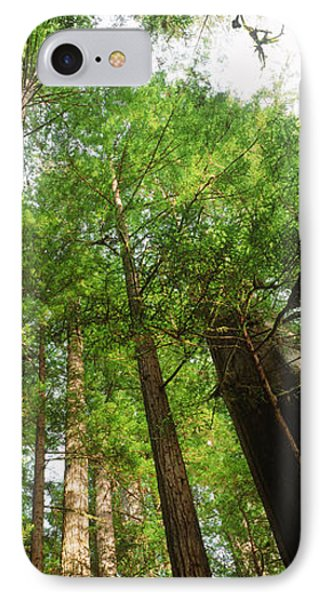 Coast Redwood Sequoia Sempivirens Trees IPhone Case