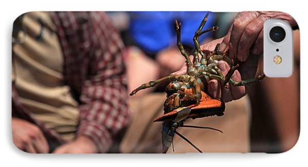 Coastal Maine Is Lobster Phone Case by Karol Livote