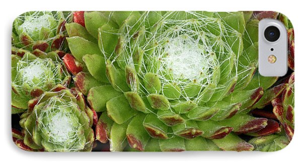 Cobweb Houseleek IPhone Case by Nigel Downer