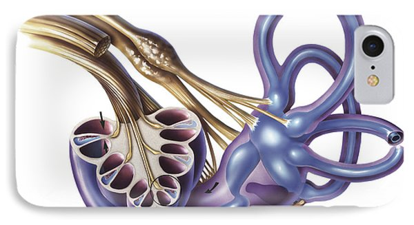 Cochlea Detail With Vestibulocochlear IPhone Case by TriFocal Communications