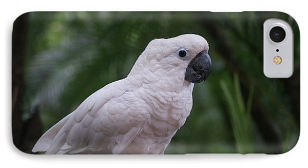 IPhone Case featuring the photograph Cockatoo by Athala Carole Bruckner