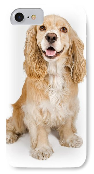 Cocker Spaniel Dog Isolated On White IPhone Case by Susan Schmitz