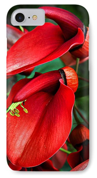 IPhone Case featuring the photograph Cockspur Coral Tree by William Tanneberger