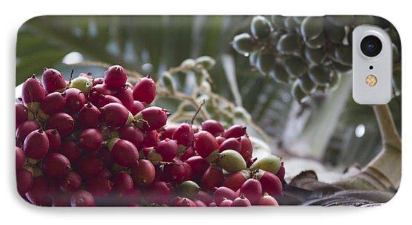 Cocos Nucifera - Niu Mikihilina - Palma - Niu - Arecaceae -  Palmae Phone Case by Sharon Mau