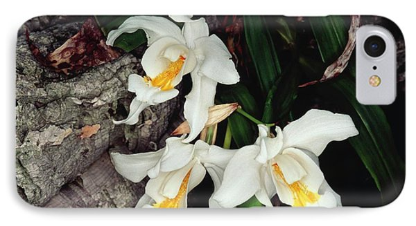 Coelogyne Cristata Epiphytic Orchid IPhone Case by Michael R Chandler