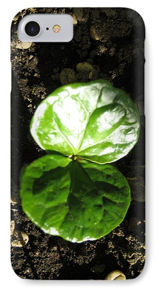 Coffee Plant The Shiny Thick Green Butterfly Look Plant Gives The Great Promise Of A Cash Crop To Th IPhone Case