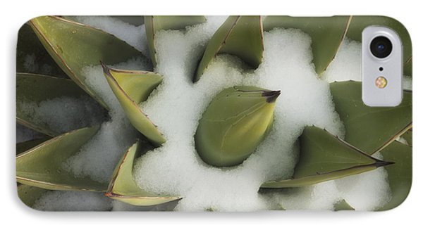Cold Agave IPhone Case by Peter Coskun