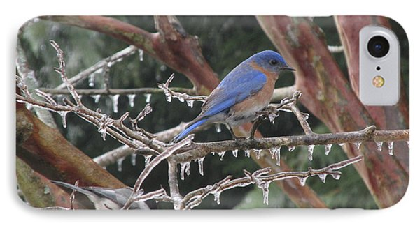 Cold And Blue IPhone Case by Marilyn Zalatan
