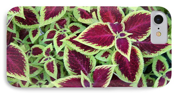 IPhone Case featuring the photograph Coleus Explosion by Michael Helfen