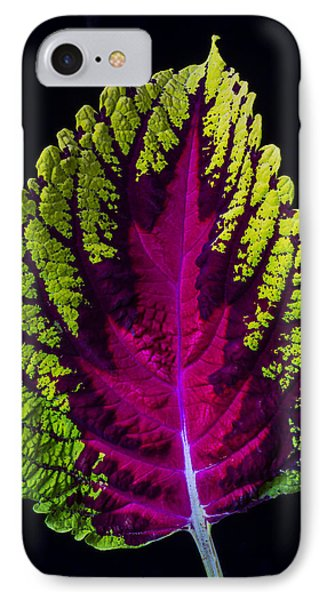 Coleus Leaf Phone Case by Garry Gay