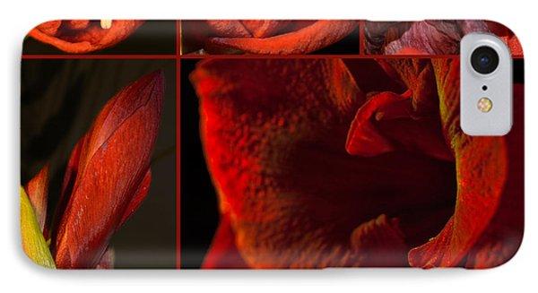 Collage - Amaryllis - Red 01- Elena Yakubovich IPhone Case by Elena Yakubovich