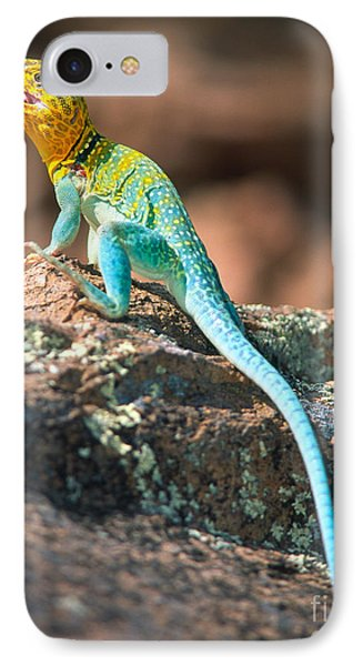 Collared Lizard IPhone Case by Inge Johnsson