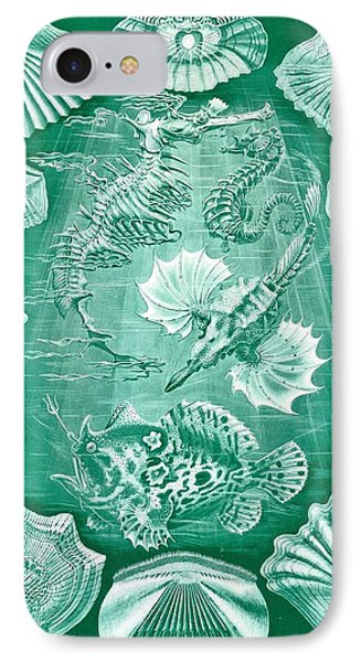 Collection Of Teleostei IPhone Case by Ernst Haeckel