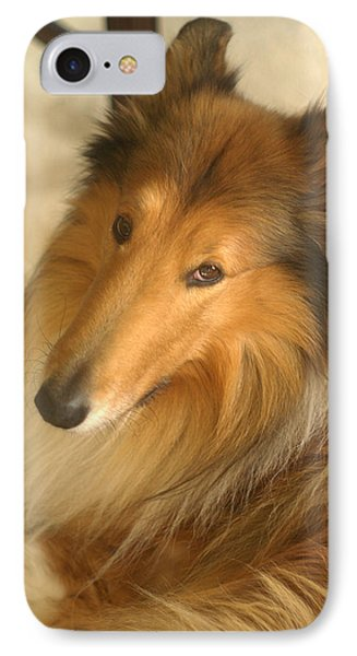 Collie Glamour Shot IPhone Case