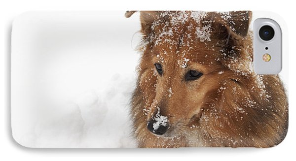 Collie In The Snow IPhone Case